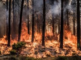Elgin fire