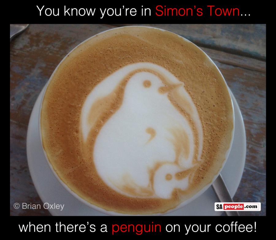 Penguin coffee in Simon's Town