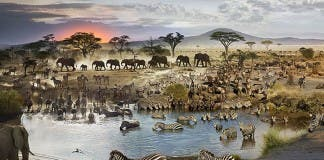 African water-hole
