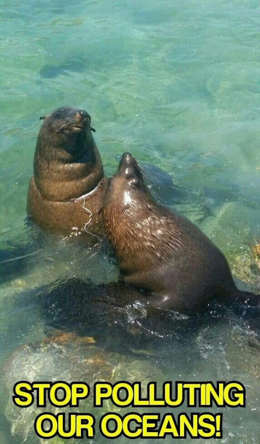 Seals with plastic