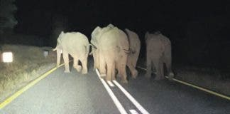 Elephants in road at Hoedspruit