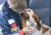 Netcare saves dog
