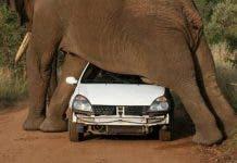 Pilanesberg Elephant