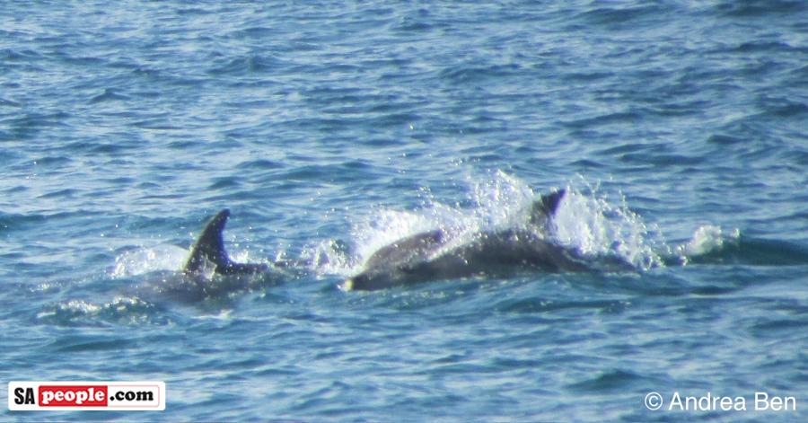 dolphins-umdloti-2