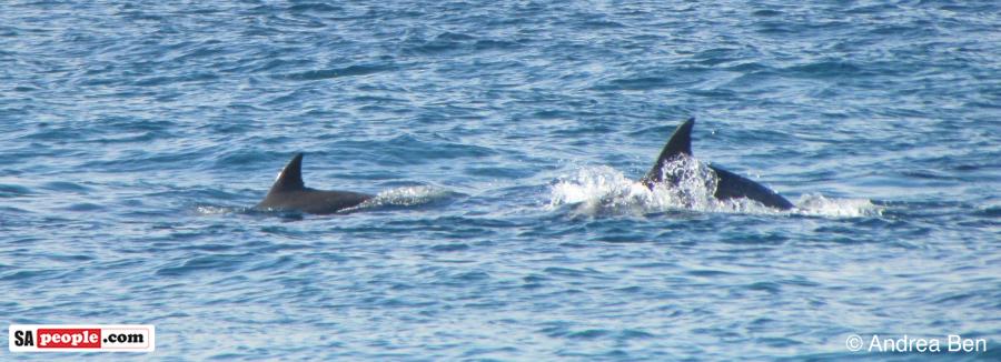 dolphins-umdloti-3
