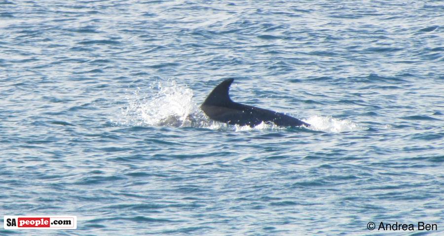 dolphins-umdloti-4