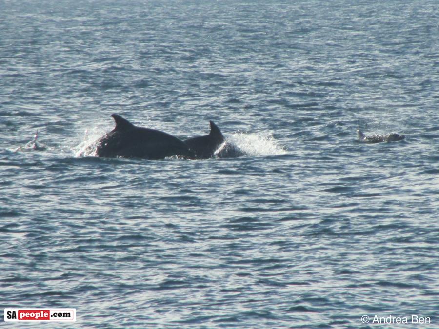 dolphins-umdloti