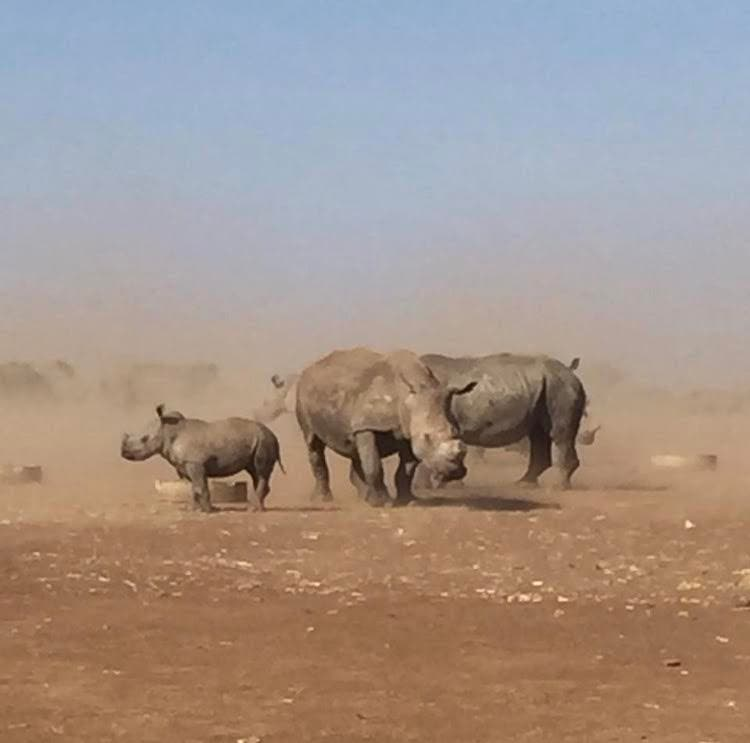 Rhinos released