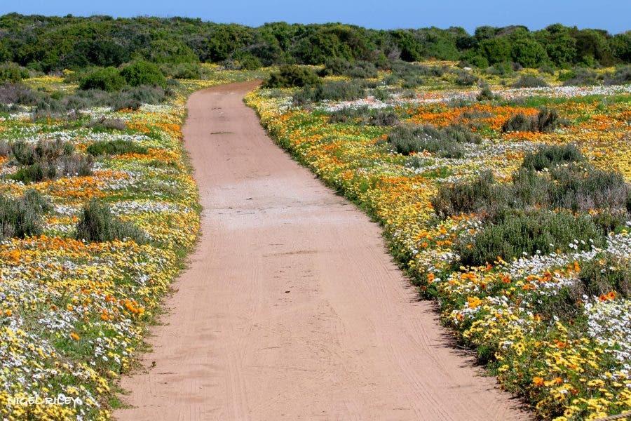 West Coast Flowers4