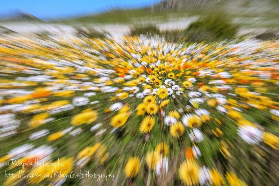 Wild Flowers 7
