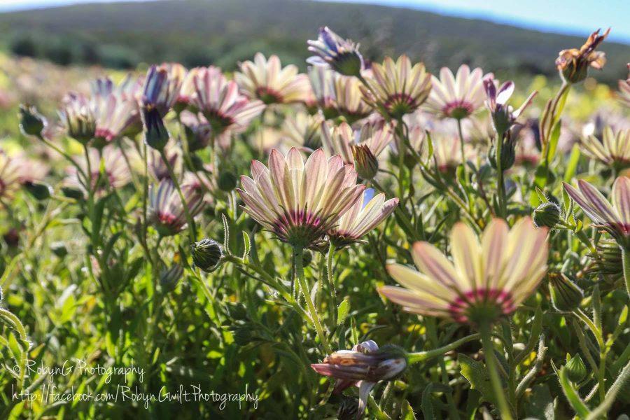 Wild Flowers 8