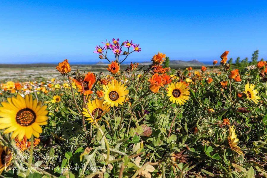 Wild Flowers 9