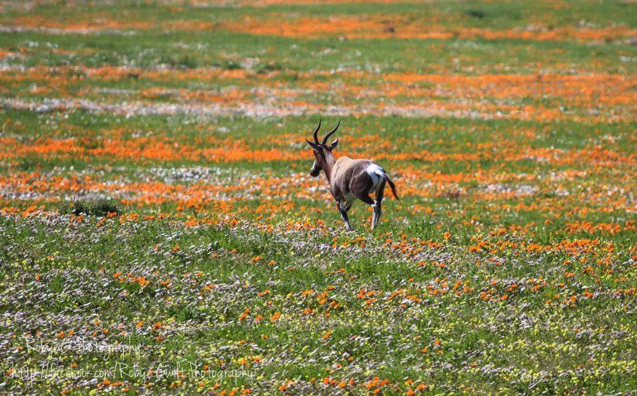 Wild Flowers animal