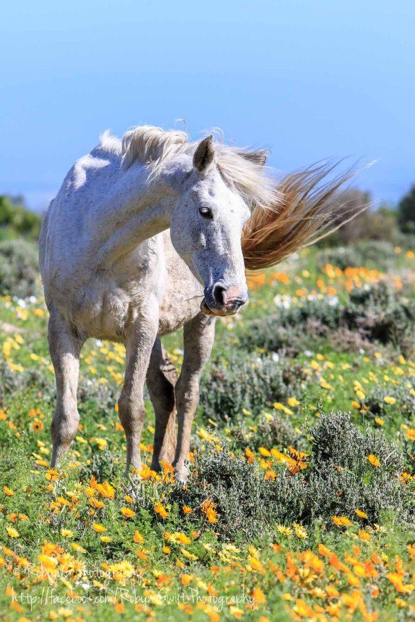 Wild Flowers horse