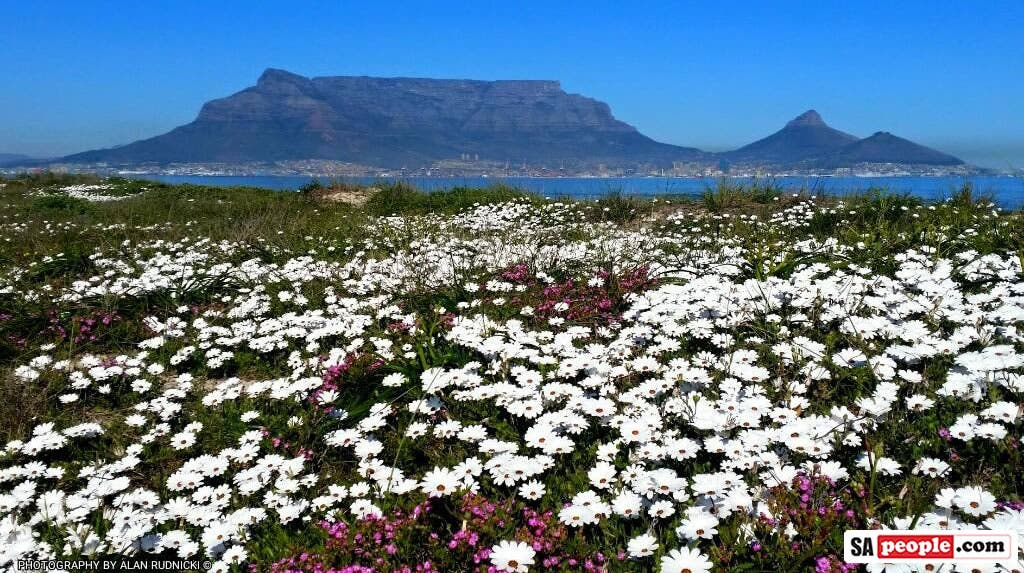 Fabulously Flowerful Views Of Table Mountain On A Perfect