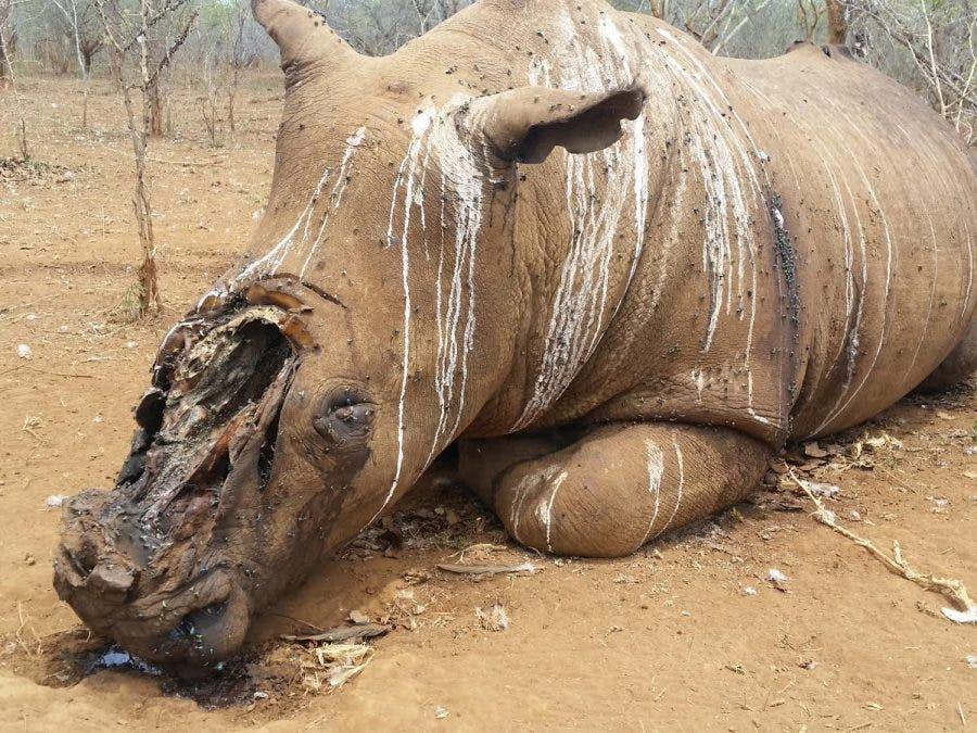 rhino-south-africa