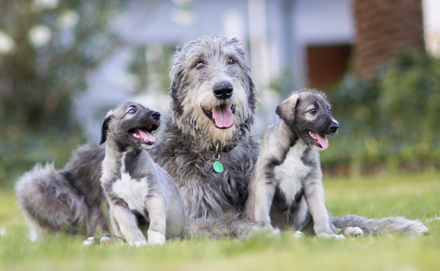 The pups at six-weeks-old. Source: Wiley Online Library