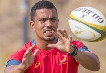 new-springbok-halfback-pair-to-face-wallabies