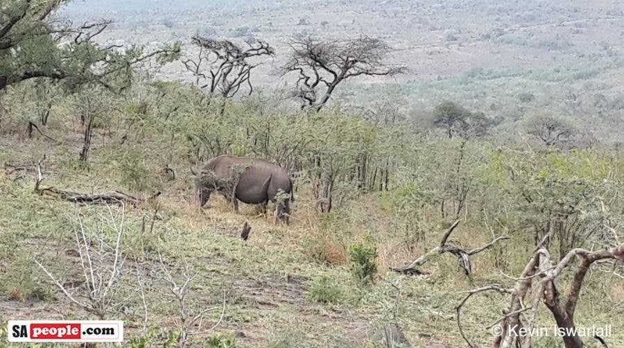 Thanks to 16 Special Heroes Saving Our Rhino    Saving SA's