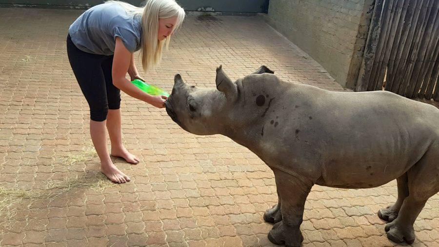 baby-rhino-orphan