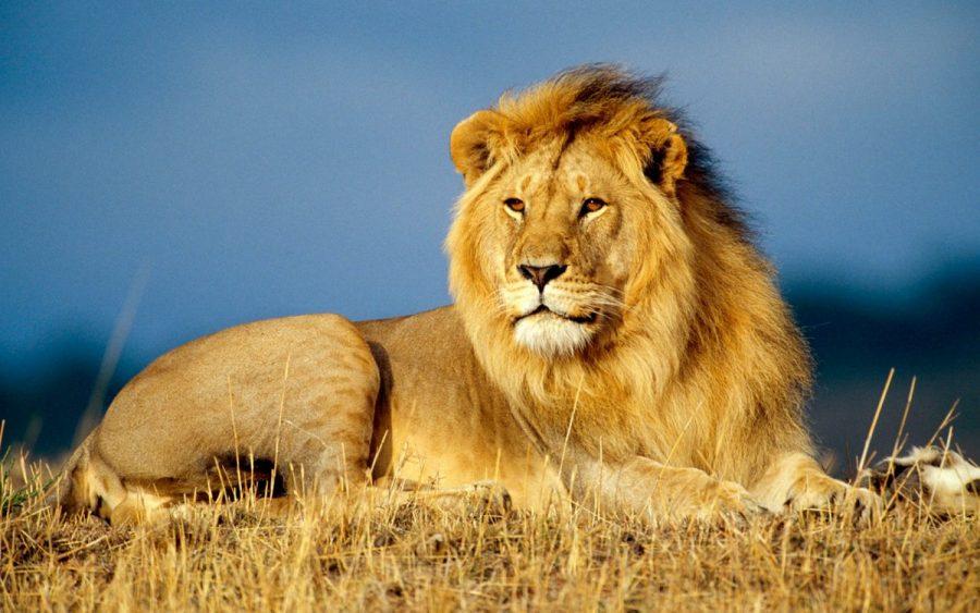 lion-cites