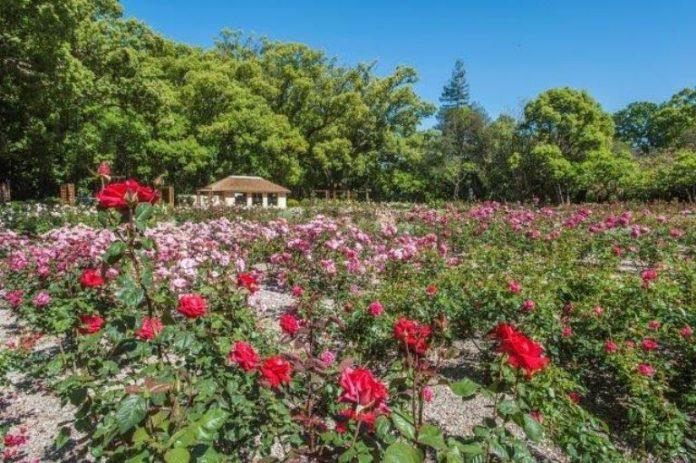 vergelegen-gardens-south-africa