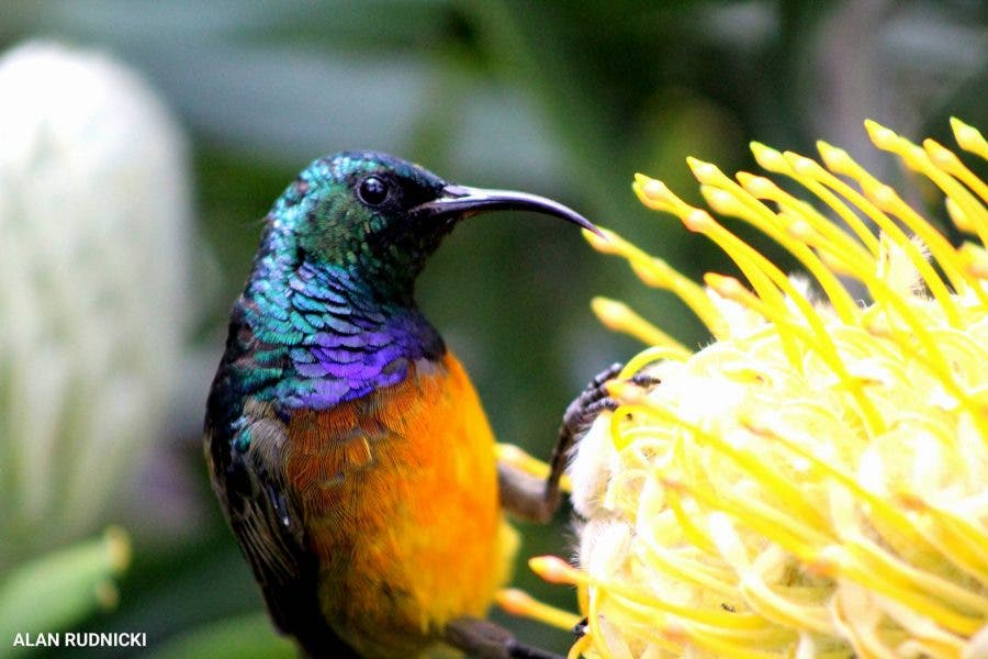 bird-with-yellow-flower2
