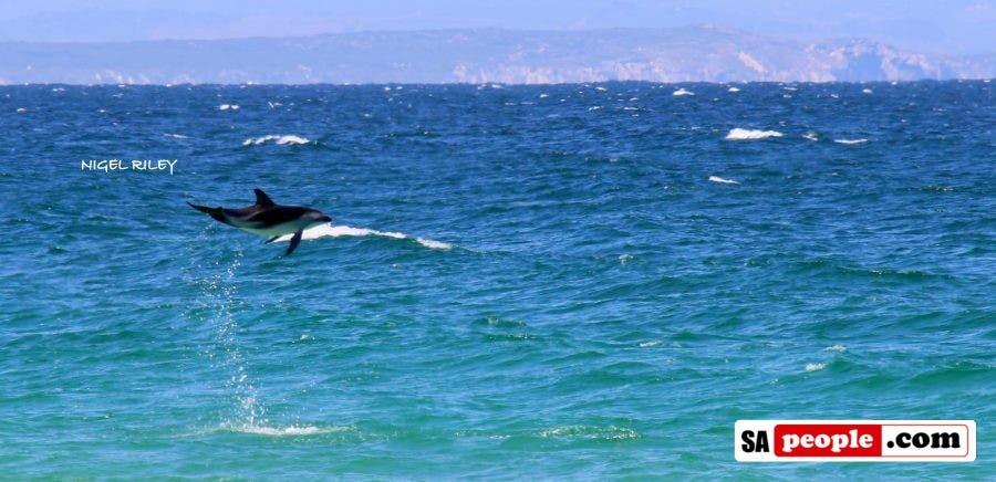 dolphin-at-fish-hoek2