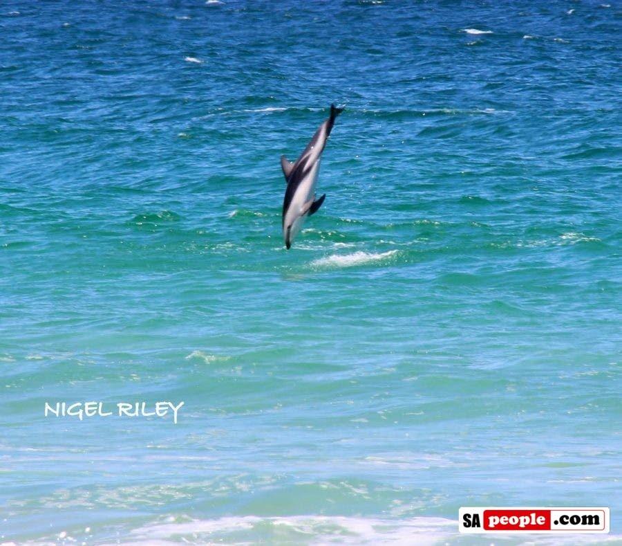dolphin-at-fish-hoek3