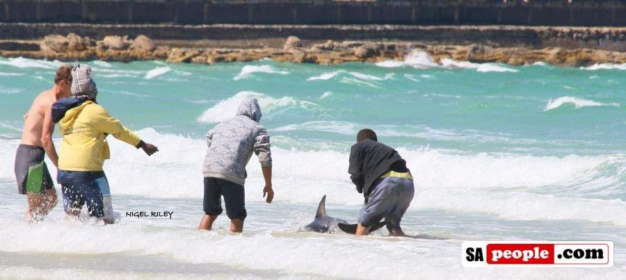 fishermen-save-dolphin-at-fish-hoek11