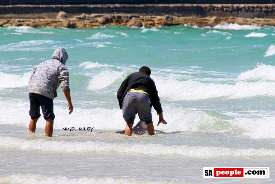 fishermen-save-dolphin-at-fish-hoek13