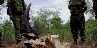 poached-rhino
