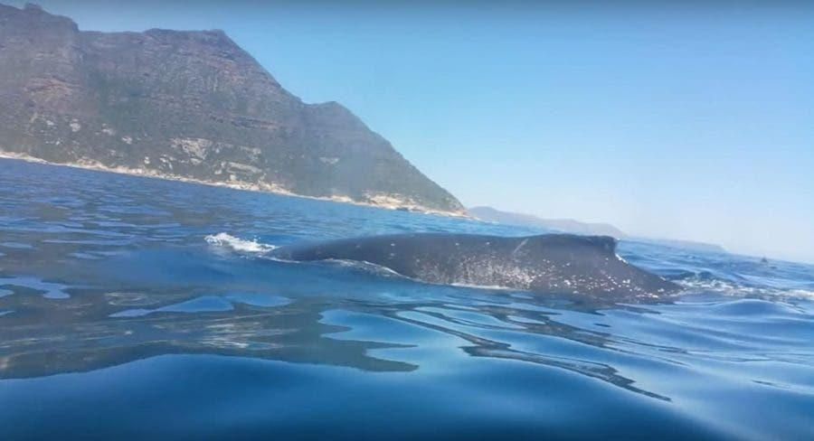 up-close-with-whale-in-sea