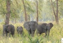 elephants-south-africa