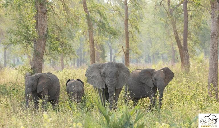 elephants-south-africa