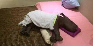 Source: Thula Thula Rhino Orphanage