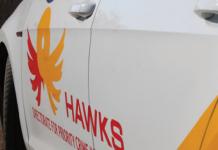 hawks south africa