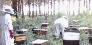 mthatha beekeeper