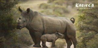 rhino thandi