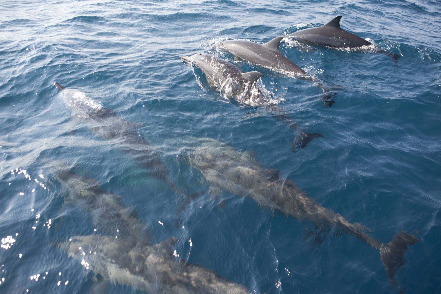 south africans save stranded dolphins disoriented by cyclone dineo - sapeople