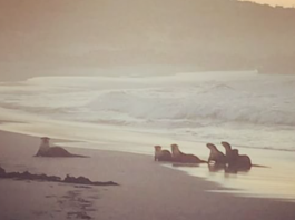 Cape Otters Onrus Beach