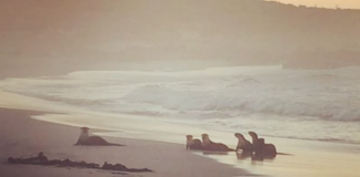 Cape Otters Onrus Beach
