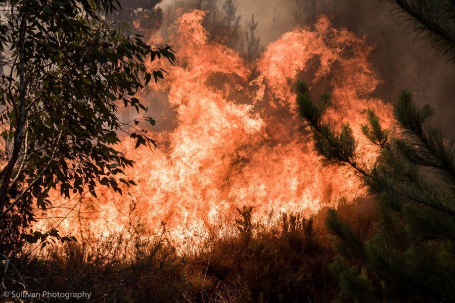robertson fire