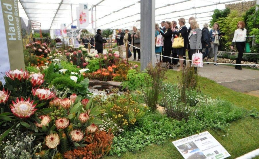South Africa Set To Bloom Again At Chelsea Flower Show