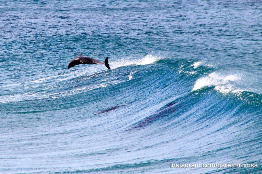 dolphins morgan bay