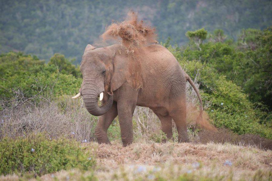 kariega-elephant-kellyvalentinejohnsen