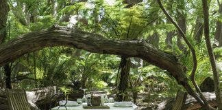 picnic in camphor forest