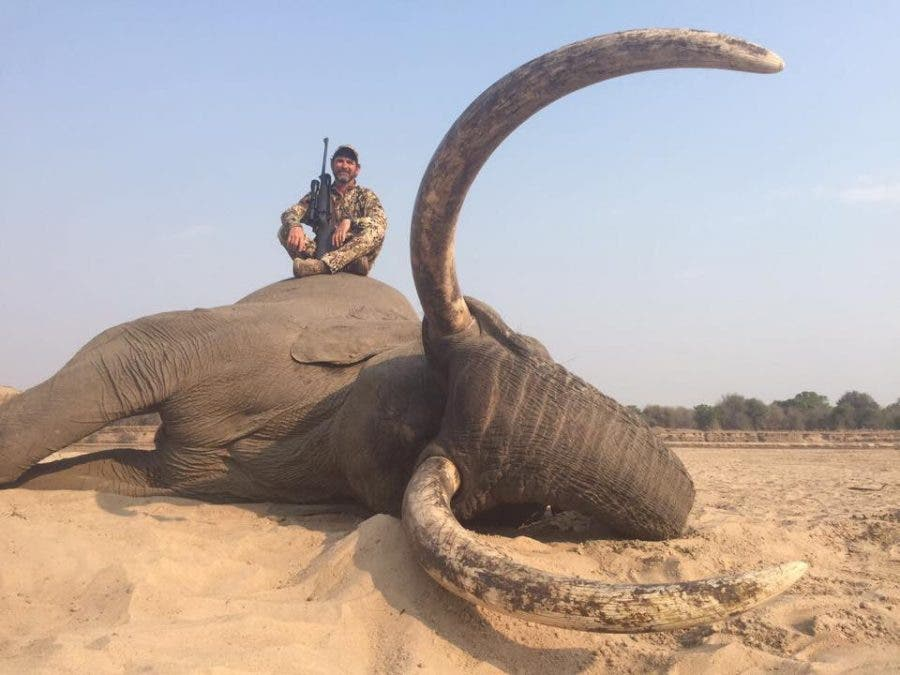 hunter kills alleged iconic big tusker elephant only