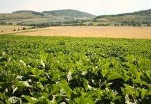 land redistribution south africa