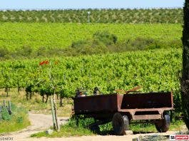 lavendar vineyard old truck
